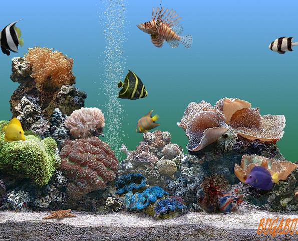 Подводный мир. Аквариум