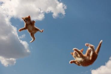Почему кошки всегда приземляются на лапы падая с высоты?