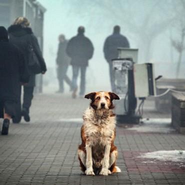 Бездомные собаки на улицах города Волгограда
