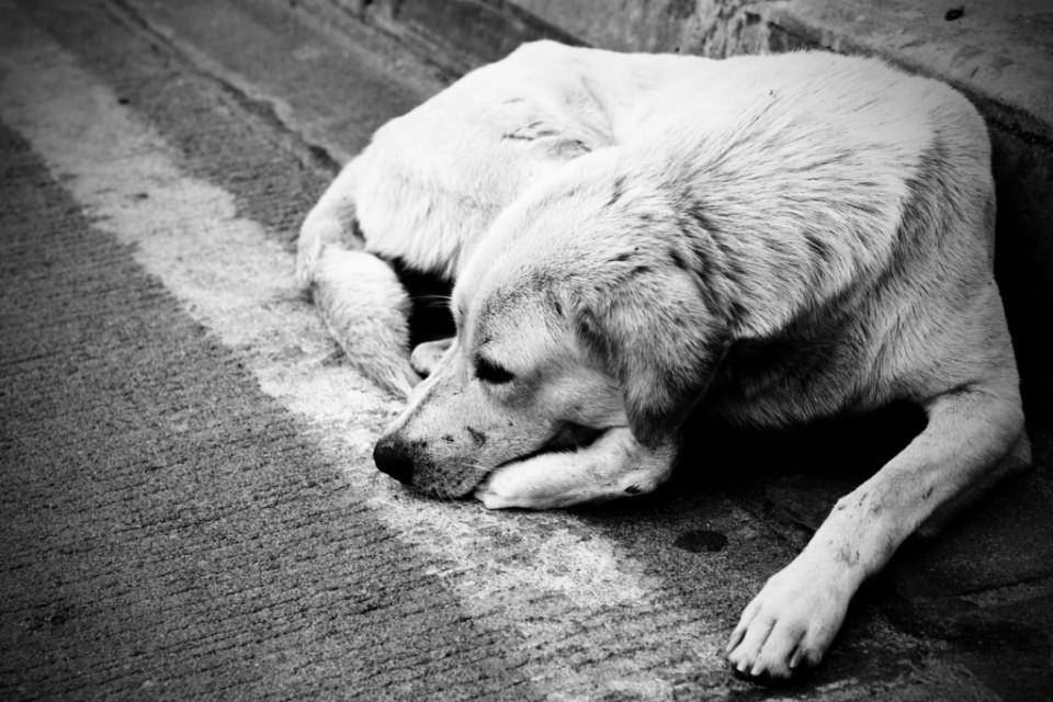Бездомные собаки проблема каждого из нас.